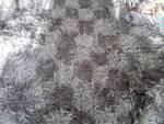 ръчно тъкано покривало 100%вълна P020111_14_46.jpg