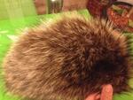 Уникална шапка - естествен косъм lennyh_IMG_37131.JPG