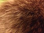 Уникална шапка - естествен косъм lennyh_IMG_37141.JPG